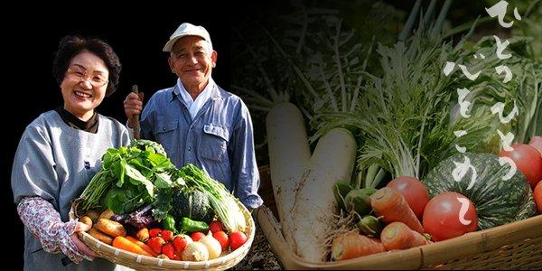 自家製野菜 写真